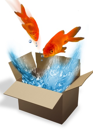 Goldfish in a box  photo