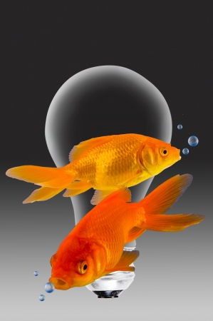 safe water: Gold Fish Swimming Around a Light Bulb