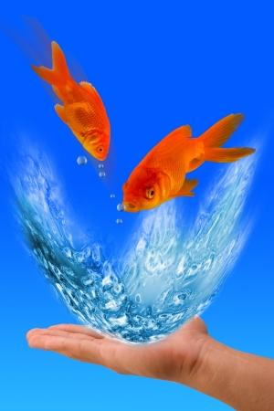 Goldfish Jumping  photo