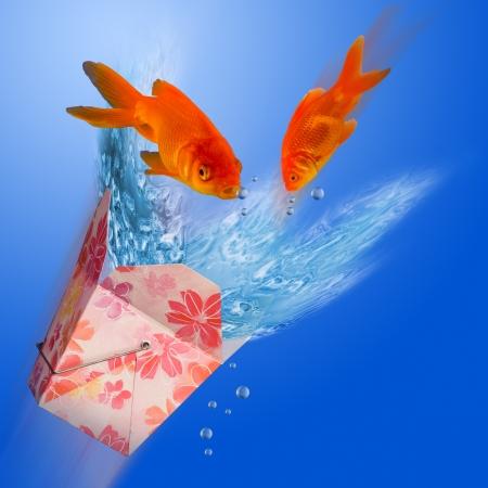 goldfish jump: To Go Box Goldfish.
