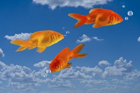Goldfish In The Sky  photo