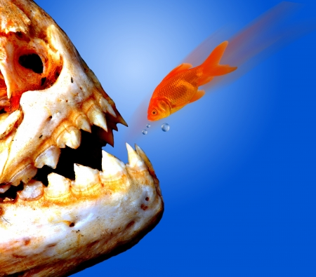 Piranha versus Goldfish  Stock Photo - 15244947
