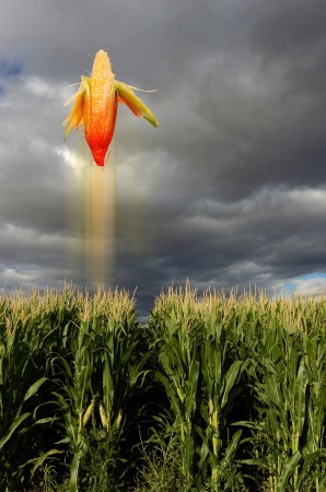 Corn Flying Like a Missile