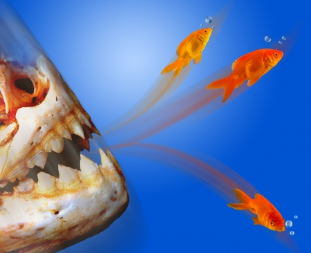 Goldfish Escaping