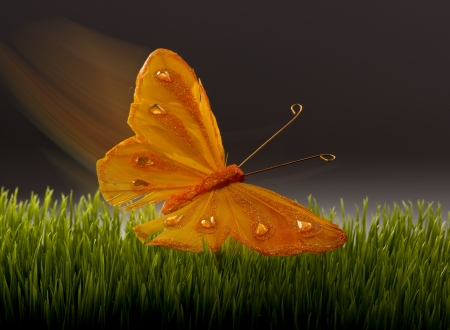 fantasize: Surreal Butterfly
