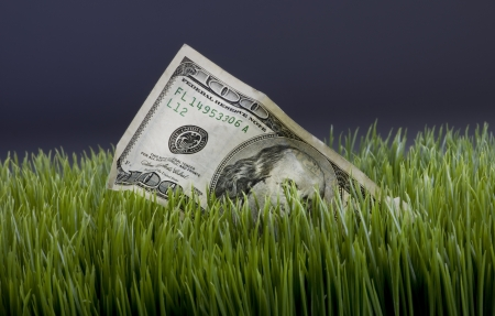 Cash in the Grass Stock Photo - 18819140