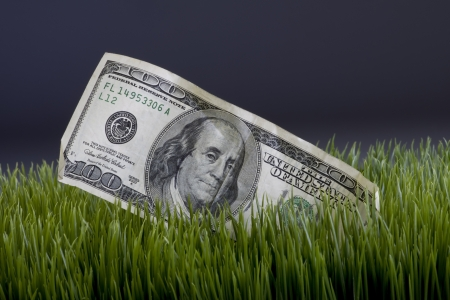 Cash in the grass  photo