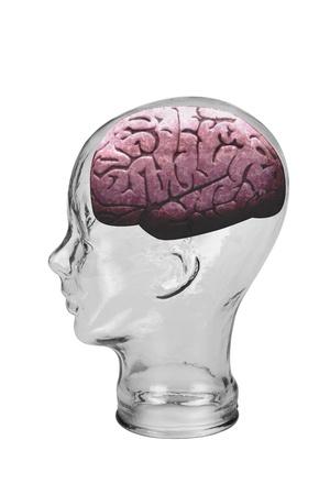 Boy Brain Stock Photo - 19668766