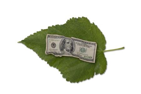 Money leaf  Banco de Imagens