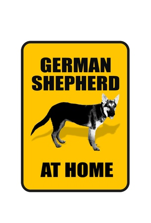 German Shepherd at Home  photo