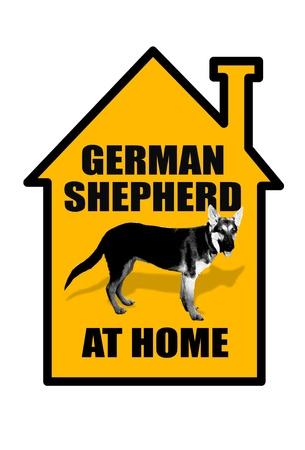 German Shepherd at Home Stock Photo - 20073763