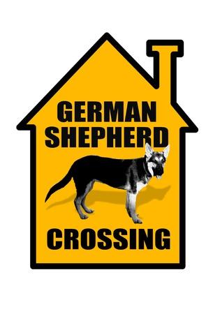 intimidating: German Shepard Crossing  Stock Photo