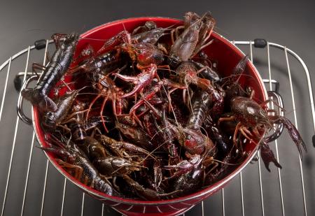 Fresh live crayfish  Stock Photo