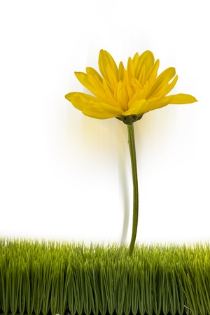 Yellow flower with room for your type Stock Photo - 22028629