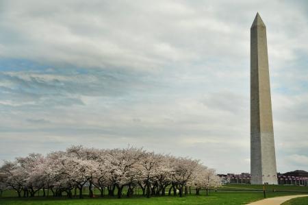 Washington Monument on the DC  Mall  Stock Photo - 22973637