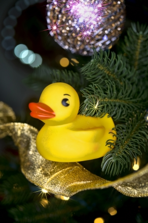 Christmas yellow rubber duck with star burst. Stock Photo - 25309706