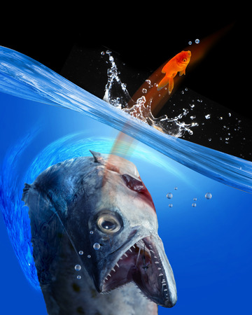freshwater: Monster fish going after small gold fish.