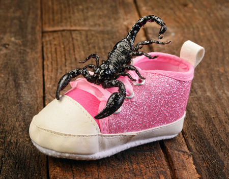 Check your shoes for a scorpion. photo