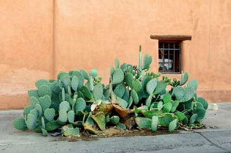New Mexico cactus infront of adobe home.