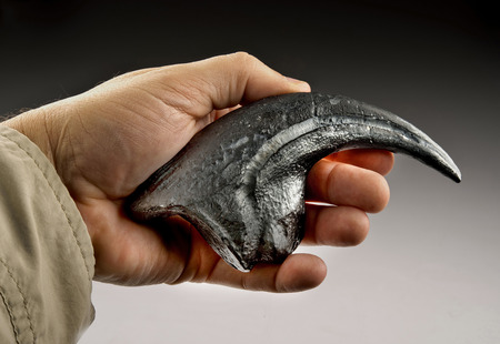 Velociraptor claw also called raptor claw.