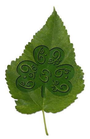 patrick day: Saint Patrick Day clover leaf.