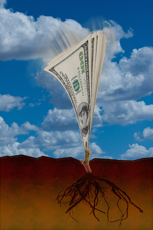 ben franklin money: Growing money from the ground up. Stock Photo