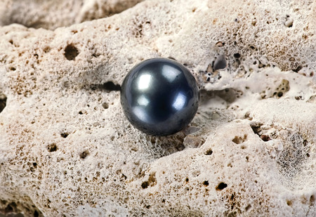 Large black Tahitian pearl on white coral. Stock Photo