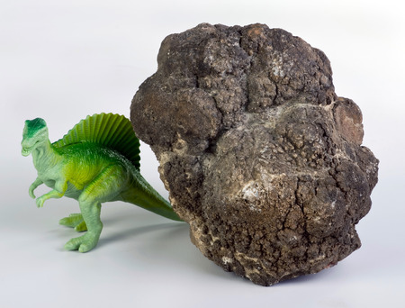 feces: Real dinosaur poop called coprolite, 140 million years old. Stock Photo