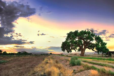tree farming: Farmland at the tranquil dusk time. Stock Photo