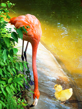 webbed legs:   Baby ducky meets baby pink flamingo.