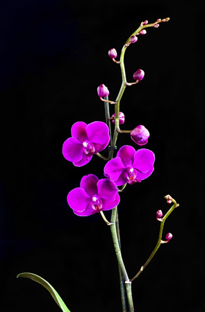 Taiwanese phalaenopsis orchid with room for your type. Reklamní fotografie - 78134302