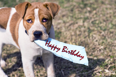 red heeler: Happy birthday from little puppy with room for your type.