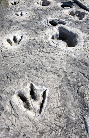 Dinosaur Valley State Park in Glen Rose,Texas showing Dino tracks over 100 million years old.