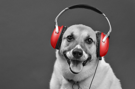 DJ doggy with red earphones with room for your type in black and white..