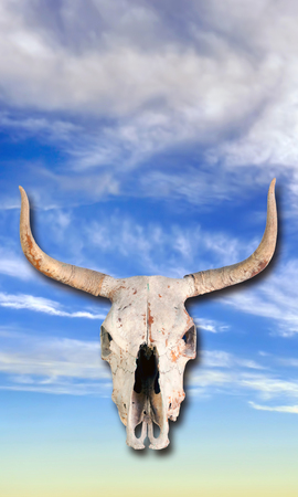 Cow skull in the blue sky heavens. Stock Photo