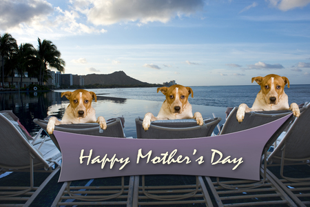 Happy Mothers Day sign with three doggys relaxing.
