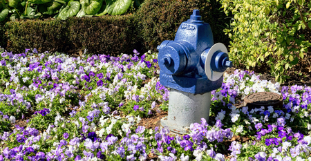 Blue painted fire hydrant in a field of vivid flowers. Stock Photo