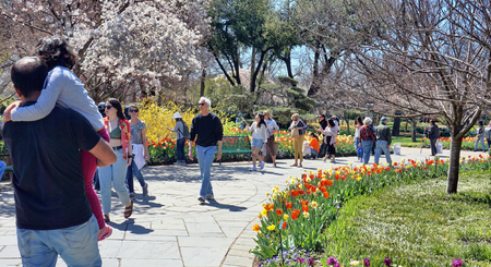 Dallas,Texas- March 18,2019 - Young familys on a nice day in Spring exploring the Dallas Arboretum Garden in Dallas, Texas. Editorial