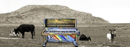 Surreal colorful jazz piano with longhorn cows..