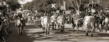 Fort Worth,Texas, Jan.4,2020 - Longhorn cattle drive at the Fort Worth Stockyards which happens ever day at 10:30 and 4:00 for free to experence. Reklamní fotografie
