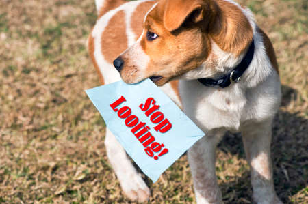Puppy holding stop looting paper sign.