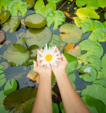 wife of bath: Woman hands holding lotus flower against leaves background
