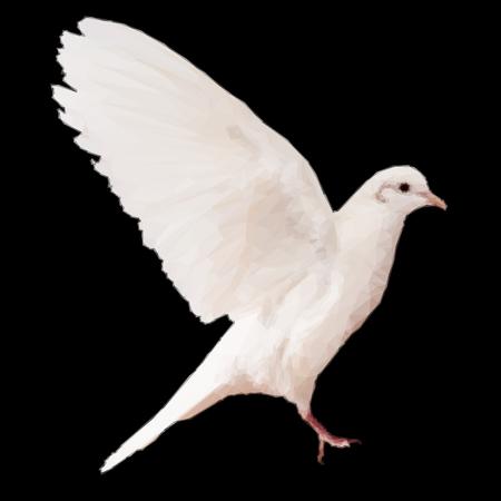 high spirits: Low poly White dove on black illustration Illustration
