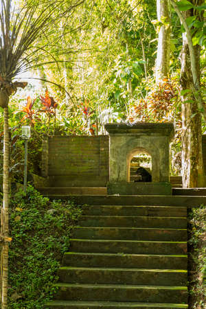 View of sacred Monkey Forest in Ubud Banco de Imagens