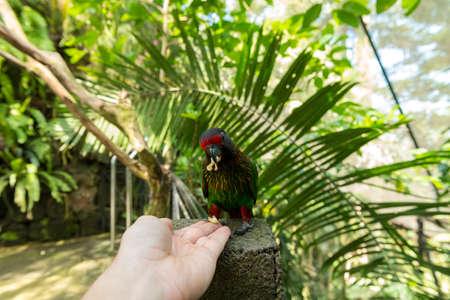Tourist in Bali bird park