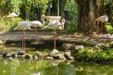 Bali bird park in Sanur Imagens
