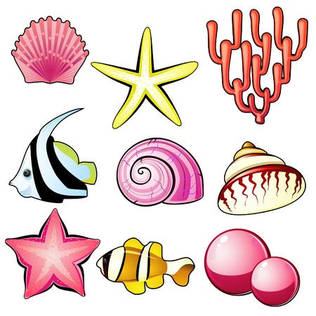 scallop shell: Set of nine marine items � shells, starfish, coral and pearls