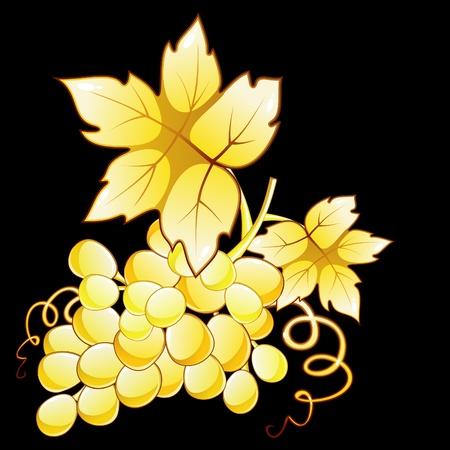 Golden grape Vector