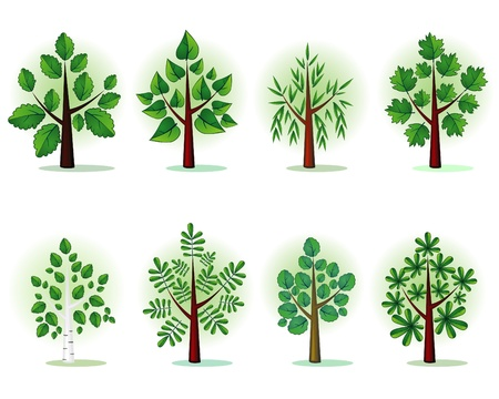 castaÑas: Árboles estilizados forestales Vectores