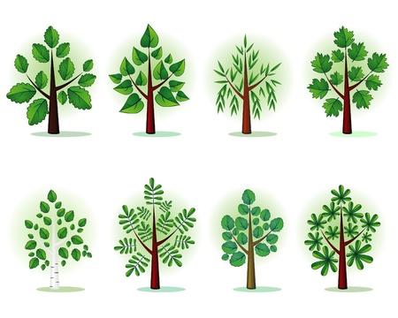 linde: Stilisierte B�ume des Waldes Illustration